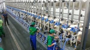 Ai ferma si vrei aparate de muls vaci de cea mai buna calitate ?