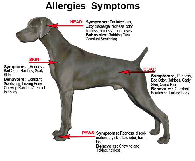 How to treat food allergies for dogs?