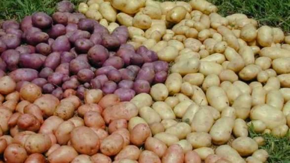 Ce soiuri de cartofi putem cultiva in Romania?